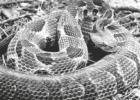 Warmer weather brings snakes out in Northeast Texas